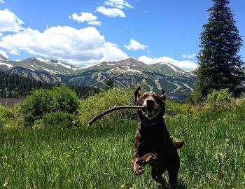 Dog-Friendly Summit County @breckenridgeinbreckenridge