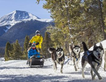 Dog Sledding Winter Season Breckenridge