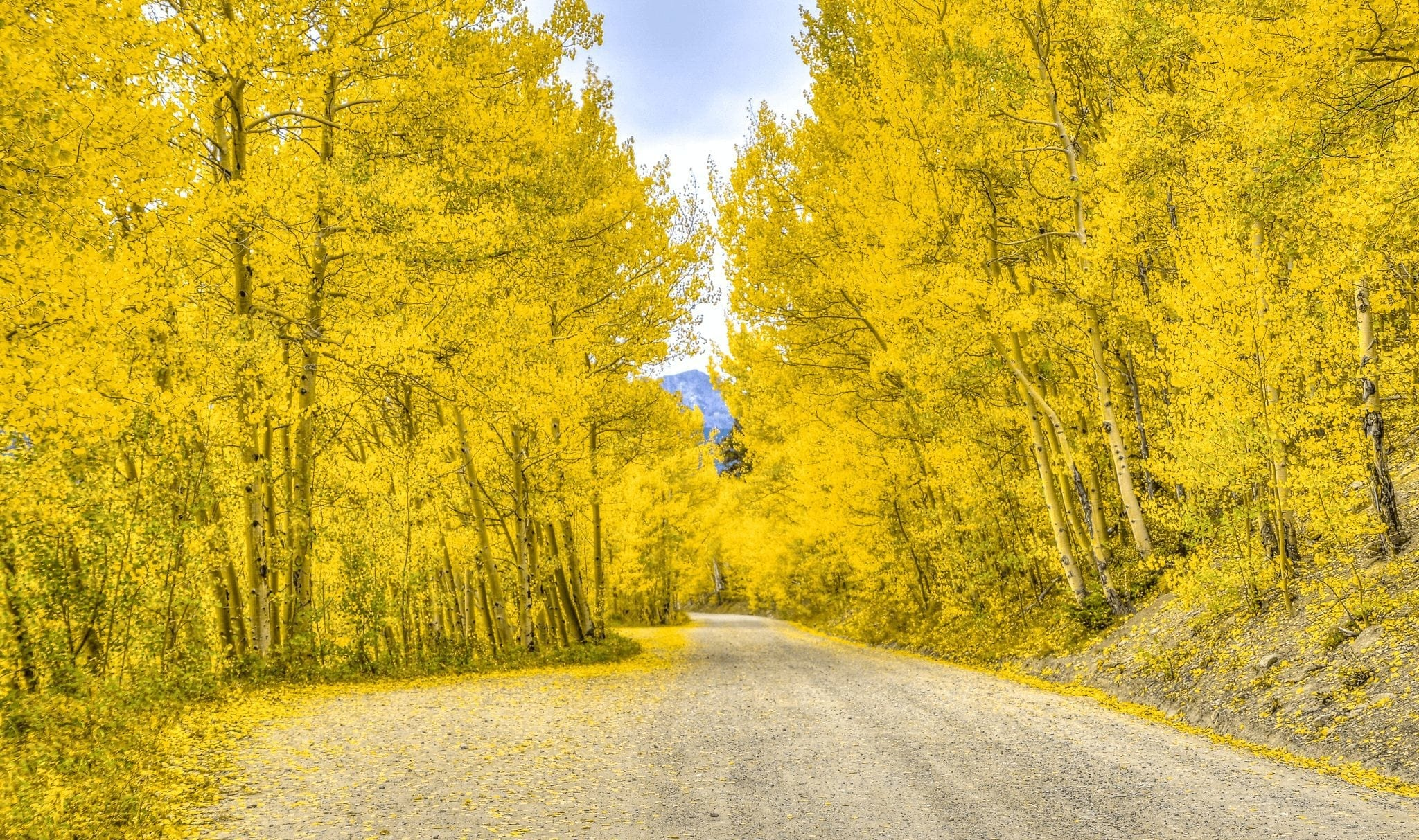Boreas Pass Breckenridge in the Fall
